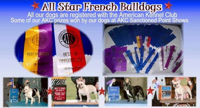 French Bulldog AKC Show Photo Ribbons
